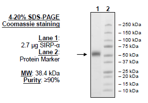 SMYD2 Chemiluminescent Assay Kit