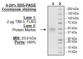 TNKS1 Histone Ribosylation Colorimetric Assay Kit