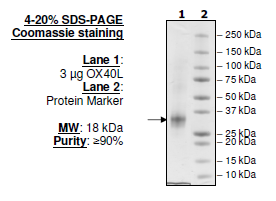 PCSK9(D374T), Biotin-labeled