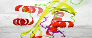 Acetyltransferase1