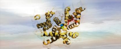 Phosphodiesterase(s)1